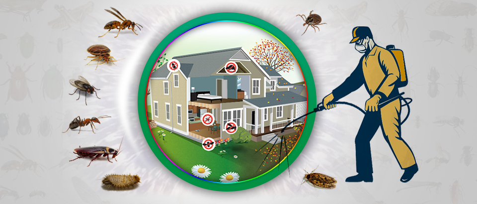 Sunshine Coast pest control